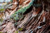 R.H. Seed Photography   Oak Creek Canyon