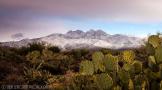 Saija Lehtonen   Four Peaks Wilderness