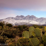 Saija Lehtonen | Four Peaks Wilderness