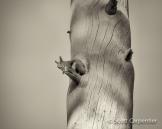 Scott Carpenter | Woods Canyon Lake