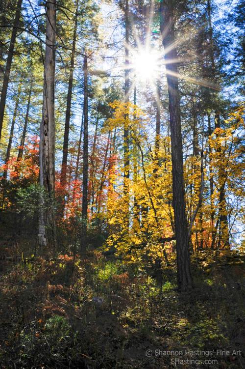 Shannon Hastings | Red Rock-Secret Mountain Wilderness