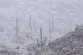 Tim Van Den Berg | Saguaro National Park West