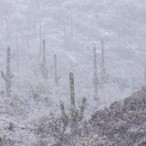 Tim Van Den Berg | Saguaro National Park West