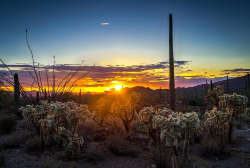 AJ Ringström | Saguaro National Park