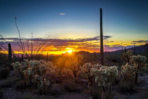AJ Ringström | Saguaro National Park