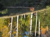 Brian R Heydorn   Lockett Meadow