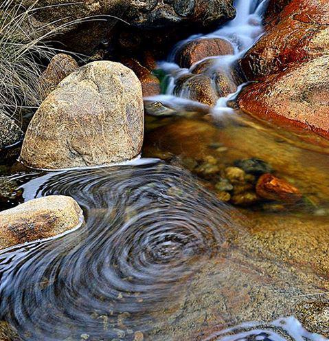 Chad Harris | Pinaleño Mountains