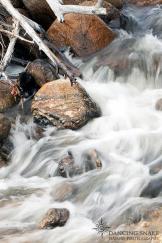 Dancing Snake Nature Photography | Sabino Canyon
