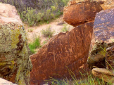 Diane Ingram | Petrified Forest National Park