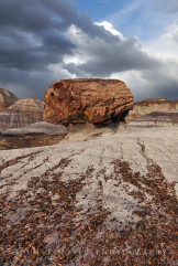 Doug Koepsel | Petrified Forest National Park