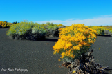 Gene Ames | Sunset Crater Volcano Natiional Monument