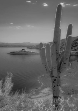 Keith Zimmerman   Roosevelt Lake