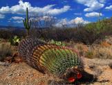 Mario El Pachuco | Saguaro National Park
