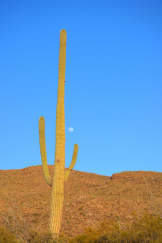 Natasha Artine | Saguaro National Park East