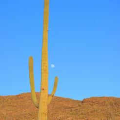 Natasha Artine | Saguaro National Park East