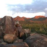 Natasha Artine | Saguaro National Park West