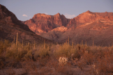 Patrick Cobb | Organ Pipe Cactus National Monument