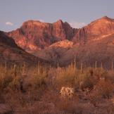 Patrick Cobb | Organ Pipe Cactus National Monument