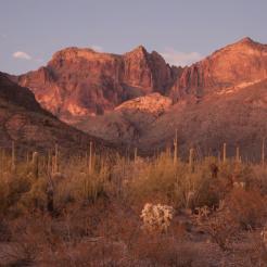 Patrick Cobb   Organ Pipe Cactus National Monument