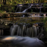 Randy Gibson | Horton Creek
