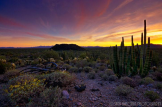 Saija Lehtonen | Organ Pipe Cactus National Monument