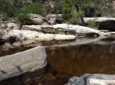 Susan Leacock   Sabino Canyon