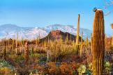 Thomas Folkers | Saguaro National Park West